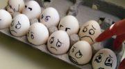 Сроки годности яиц колеблются от 3 часов до нескольких месяцев
