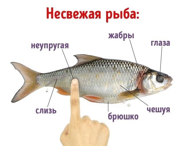 Основные признаки недоброкачественности рыбы