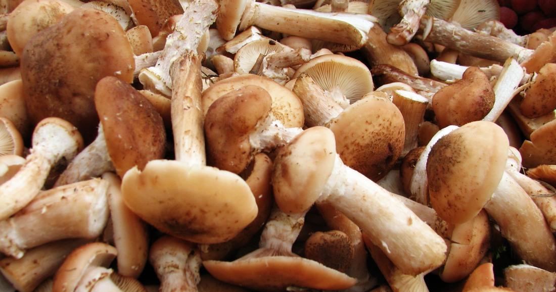 грибы хранятся не долго